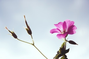 flower_against_sky