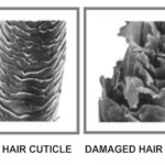 What Are Ceramides And What Do They Mean For Your Hair