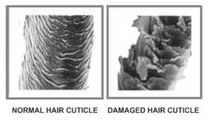 Zoomed images of normal and damaged hair