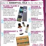 What Do Essential Oils Do For Your Hair? – BHI Postcard Tips