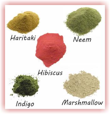 Various ayurvedic powders - Haritaki Neem Hibiscus Indigo Marshmallow root