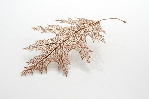 human hair leaves
