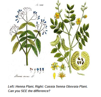 Cassia Obovata and Henna