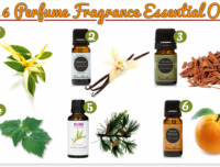 Top 6 perfume fragrance essential oils 2