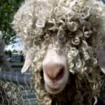 What If Your Human Hair Extensions Had A Little Goat Hair Mixed In, Would You Care?