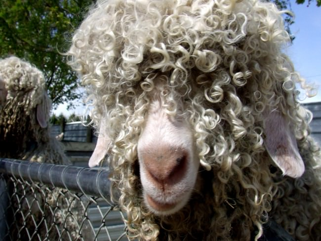 What If Your Human Hair Extensions Had A Little Goat Hair