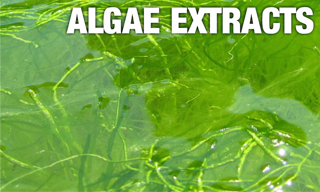 algae extracts